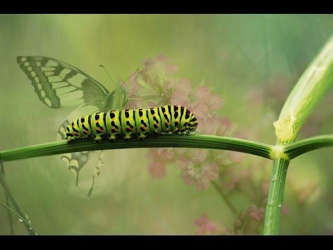 Bruce Lipton: Vzostup motýľa [ľudstva]