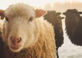 Abigail Wainwright – Oslavujte svou unikátnost aneb černá ovce rodiny je nejsilnější z duší