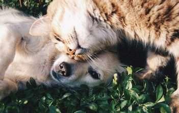 Reinkarnace - zvířecí miláčci
