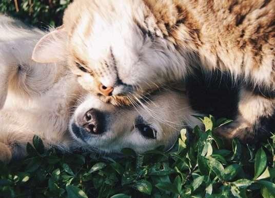 Může se esence duše zvířete reinkarnovat zpět?